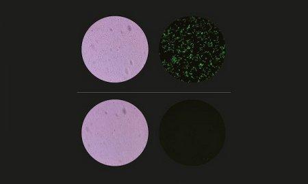 Микрофлюидальная система растворяет клетки для биохимических анализов