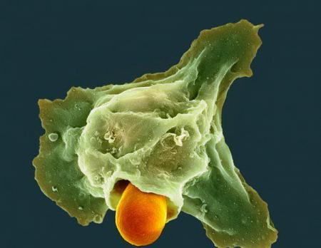 Горечь утраты подавляет иммунитет