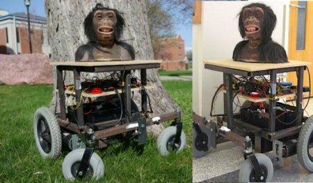 Обезьян подключат к Интернету и дадут возможность управлять роботом