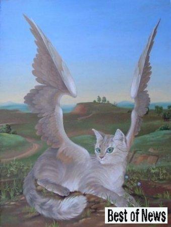 В татарской деревне нашли крылатую кошку + Видео