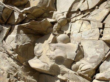В Чечне нашли окаменелые яйца динозавров
