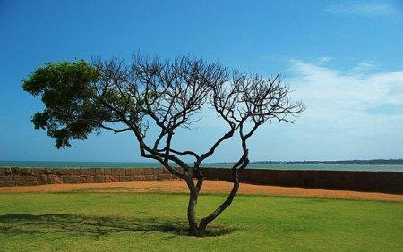 Экстракты дерева ниим помогут в борьбе с ВИЧ