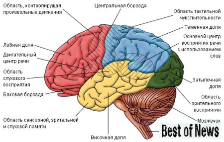 Головной мозг человека. Скрытые воспоминания