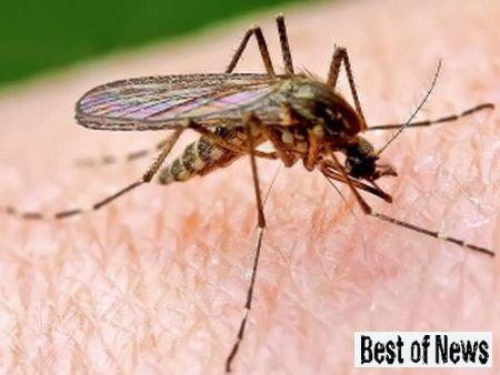 Как бороться с насекомыми