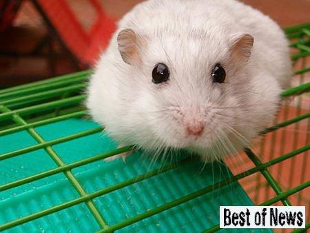 Гормон счастья Серотонин у мышей