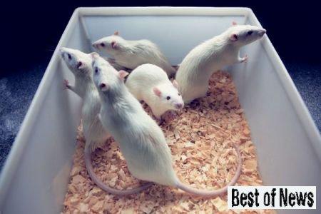 Исследование интеллекта посредством экспериментов на животных