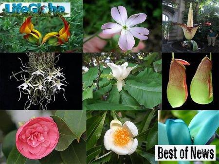 Самые редкие и самые красивые цветы в Мире