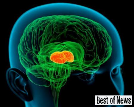 конфликты влияют на мозг подростков