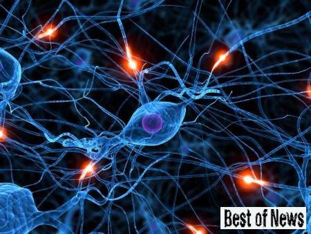 нейроны отличаются