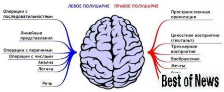 Зачем одной голове два полушария