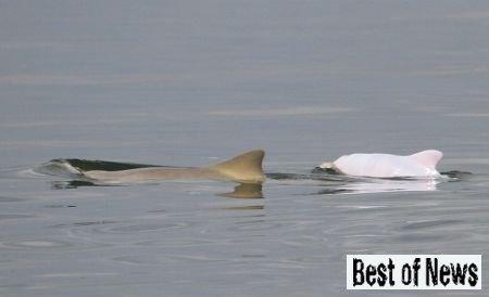 В Бразилии найден уникальный белый дельфин
