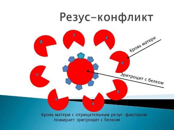 беременность с первой группой крови