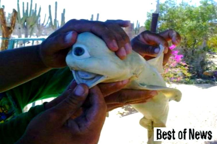 одноглазая акула альбинос