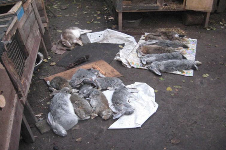 чупакабра убила кроликов