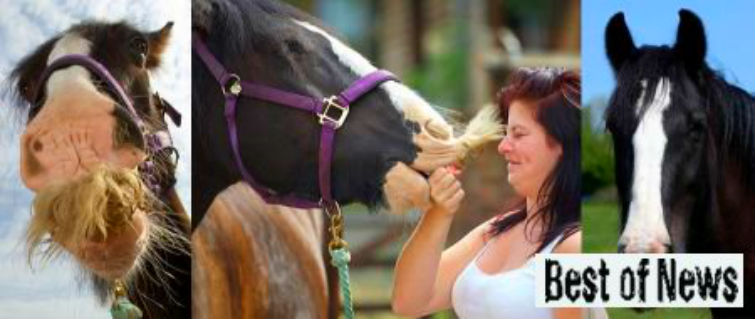 усатый конь