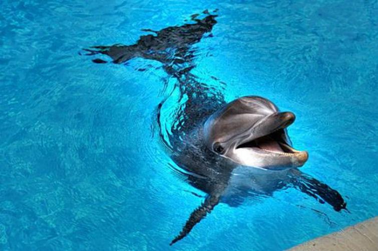 дельфины понимают смерть
