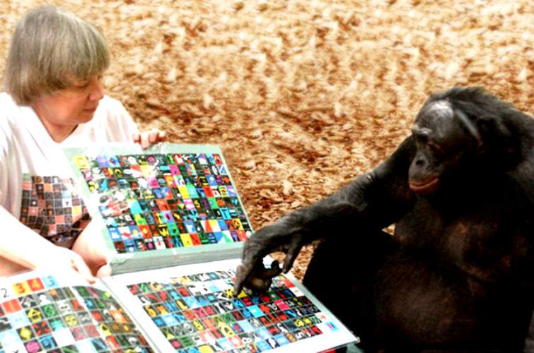 обезьяны умеют говорить