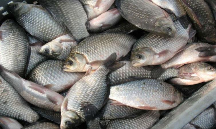 паразиты в рыбе