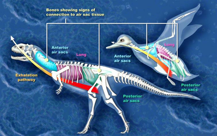 развитие маюнгазавра