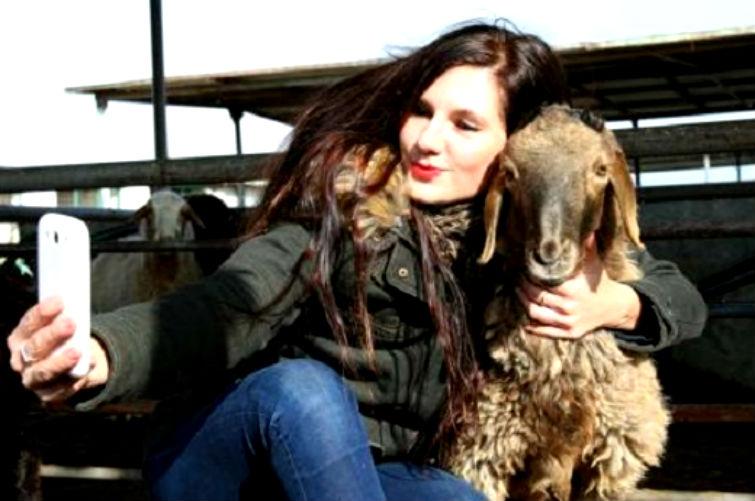 селфи с овцой