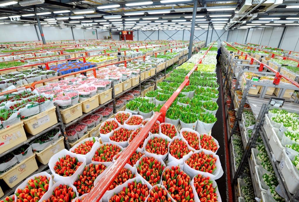 Цветочная продукция из Нидерландов
