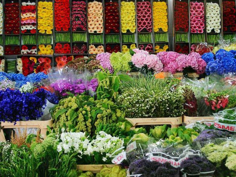 Цветы из за рубежа