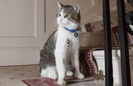 Британский кот Ларри на службе
