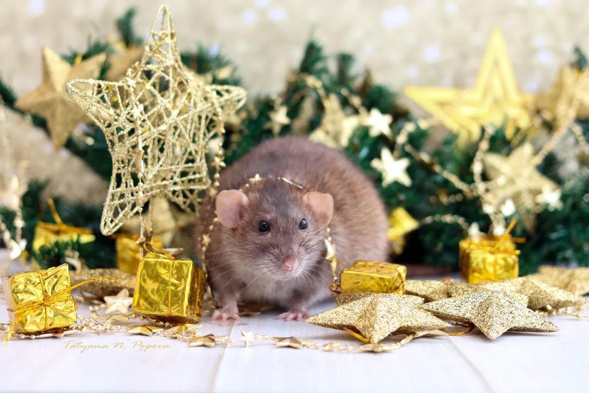 Встречаем 2020 год Крысы